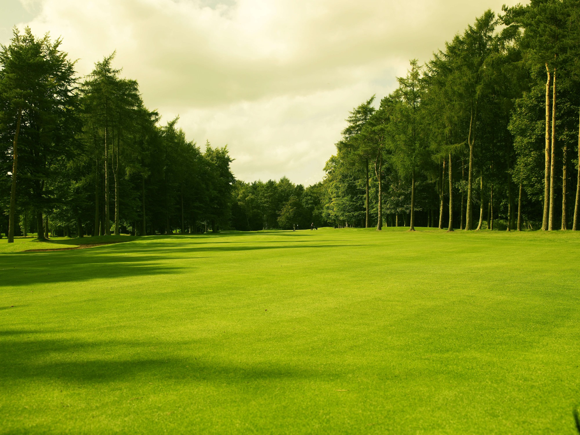Forest Pines Golf Club   National Club Golfer Top 100 Courses