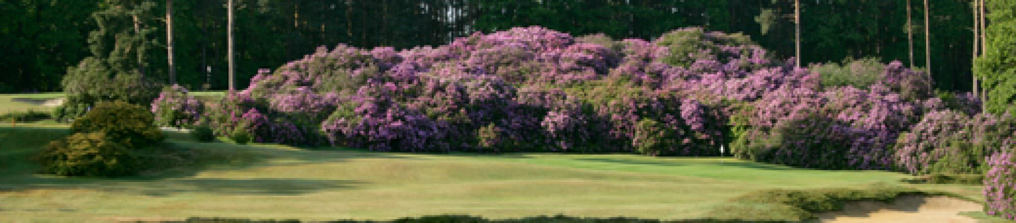 Played by NCG:  Swinley Forest